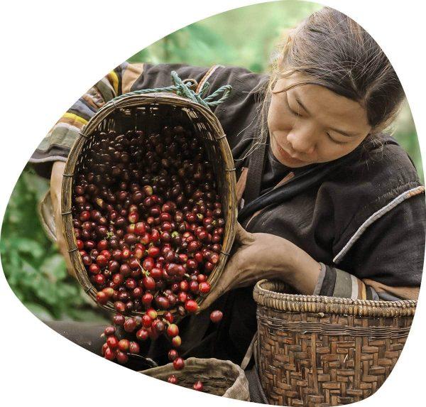 Онлайн магазин за кафе и консумативи на марките PortoRico, Passione и San Benedeto